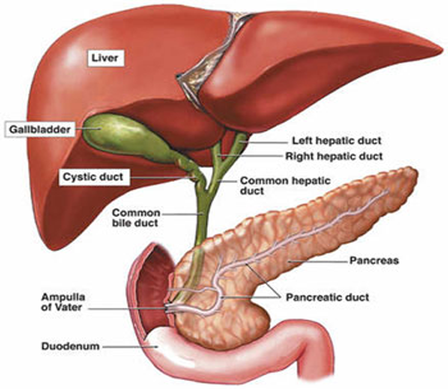 bile duct surgery in suratbile duct surgery in surat