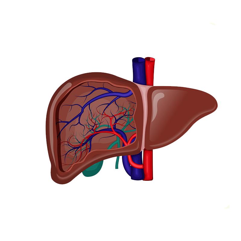 Gallbladder Removal Surgery in SuratGallbladder Surgery