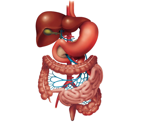 gastrointestinal surgery in Suratgastrointestinal surgery in  Surat