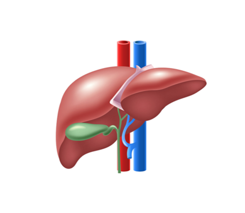 Liver Surgery in suratLiver Surgery in surat