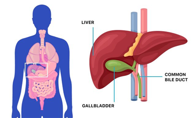 symptoms of gallbladder, Best Laparoscopic Surgeon in Suratsymptoms of gallbladder